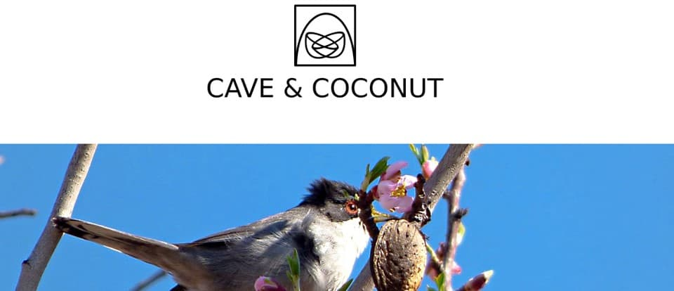 Cave and coconut