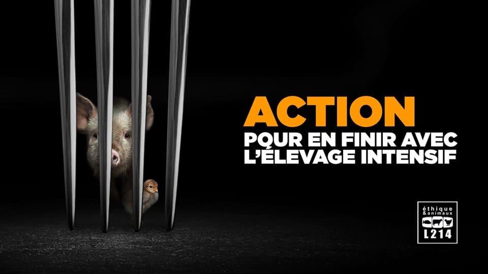 Action - Pour en finir avec l'élevage intensif 1