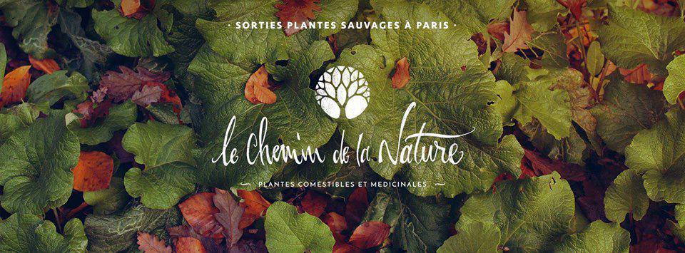 Balade à la découverte des plantes sauvages comestibles et médicinales - Paris 1