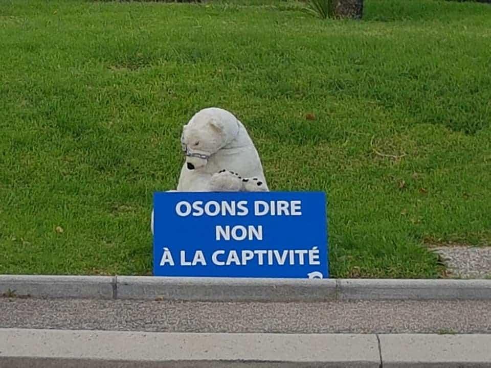 Journée mondiale pour sauver les ours - Antibes (06600) 1