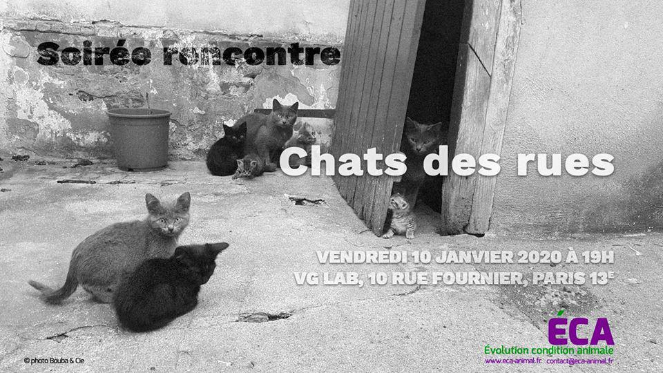 Soirée rencontre : chats des rues chez VG Lab Paris 1