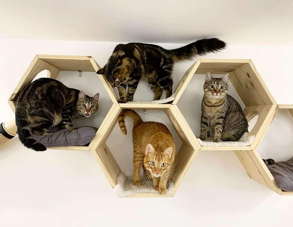 Meow cats café